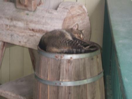 "Some of Florida's ""Not-So-Wildlife"" Enjoys a Nap on a Barrel"